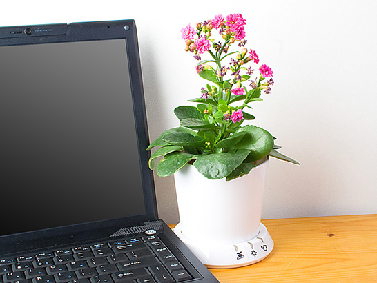 USB Flower Pot